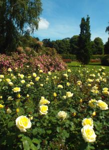 Glorious Rose Garden